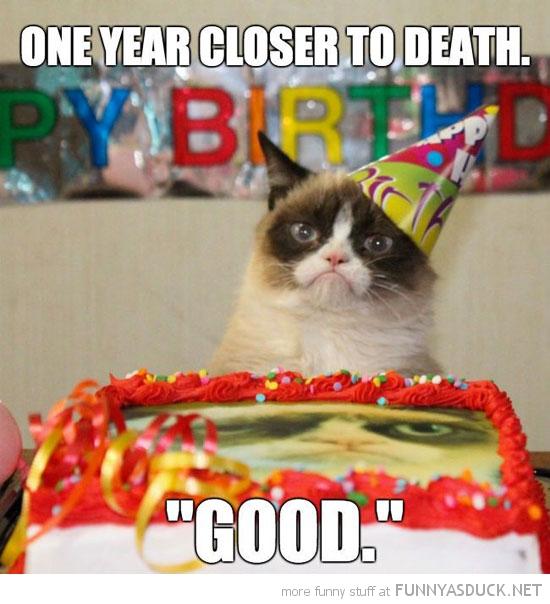 Grumpy Cat B-day